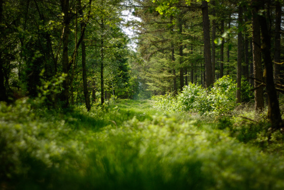 Wald CAVE AWAY HEIMPLANET